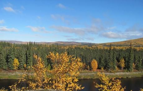 Sunny Alaskan Fall Day