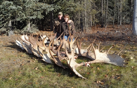 Alaska-Moose-Antlers