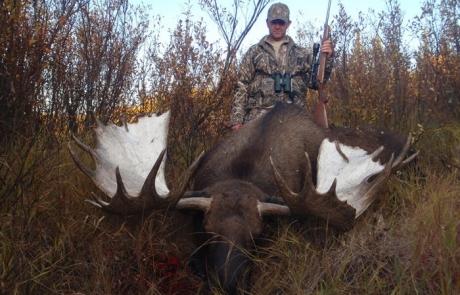Huge Alaskan Moose
