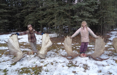 Little Girls and Alaska Moose