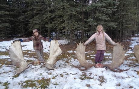 Little Girls and Alaska Moose