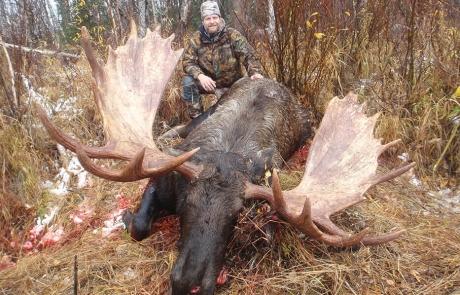 Massive Alaska Bull Moose