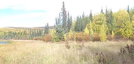Alaska Trophy Moose Hunt