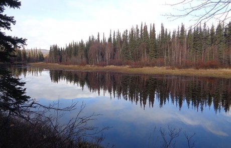 river moose hunting