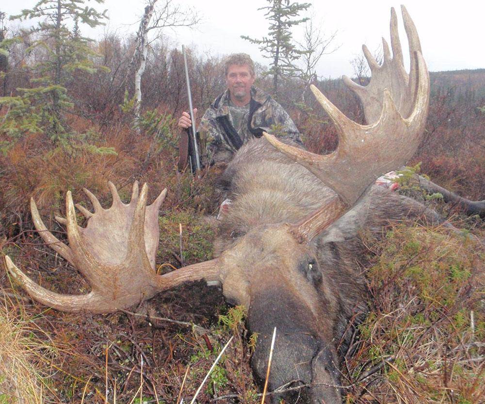 huge bull moose