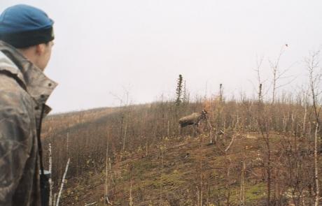 Calling-Moose-in-Alaska