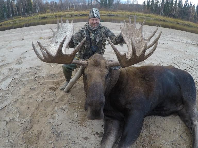 trophy bull moose