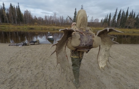 alaskan moose hunt